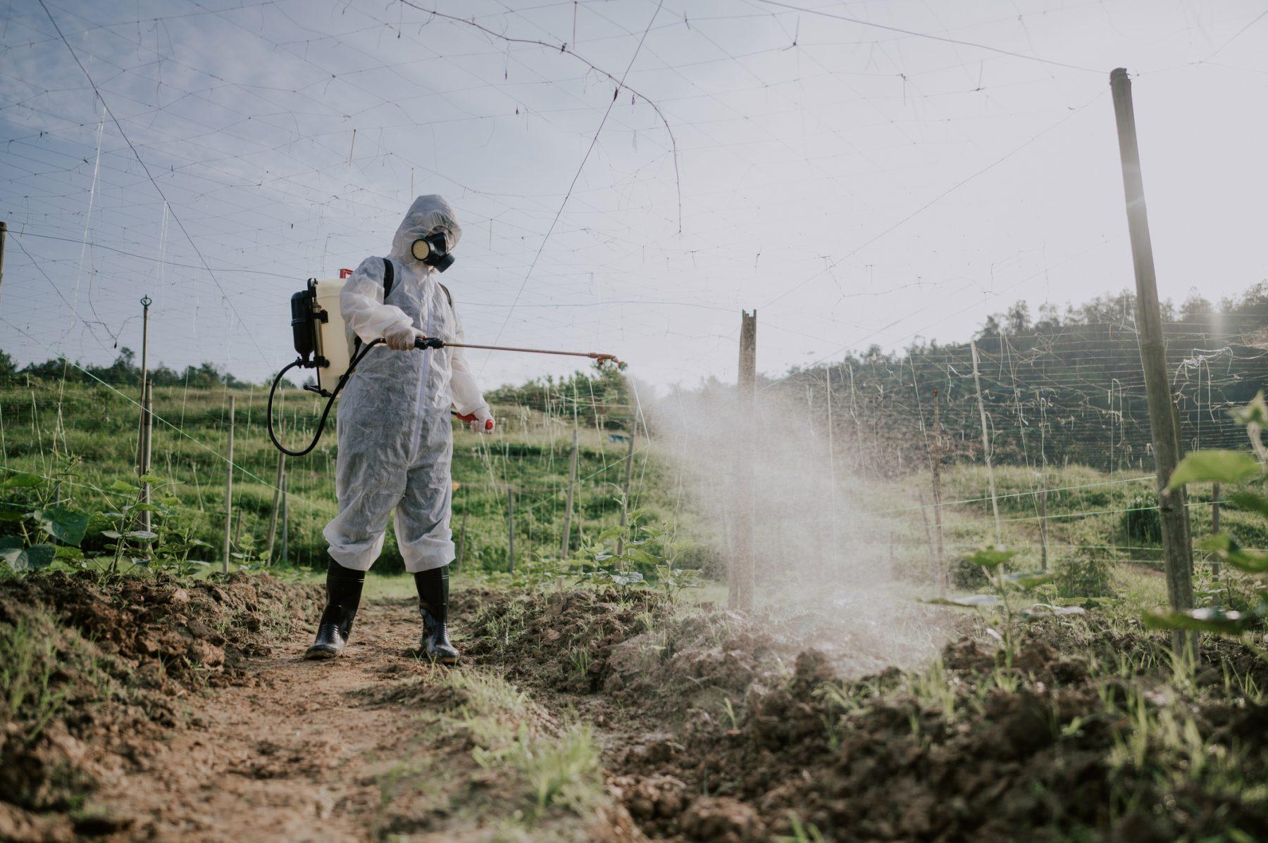 A field worker spraying paraquat.